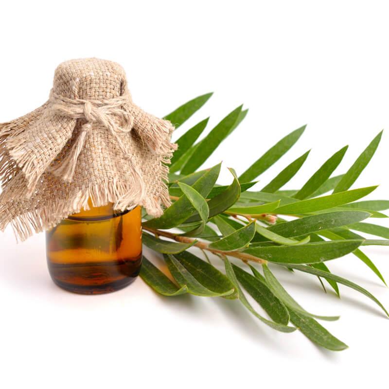 Tea tree extract